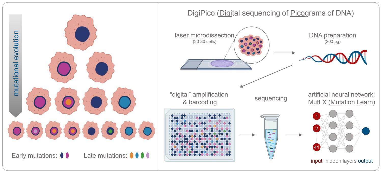 Detecting rare mutations